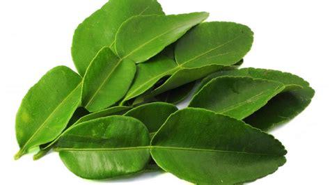 simpan kegunaan daun limau purut  masakan rasa