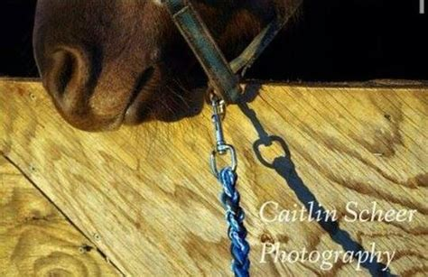 rope halter  matching lead rope horse sized reins  rescues