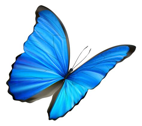 Blue Butterfly Cliparts   Cliparts and Others Art Inspiration