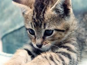 Cute-<strong>kitten</strong>-cute-<strong>kittens</strong>-18565723-1024-768.jpg