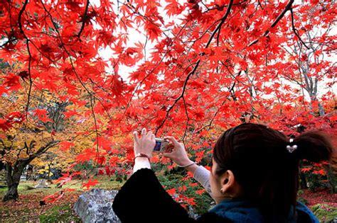 imagenes de otoño en japon fotos del oto 241 o en jap 243 n