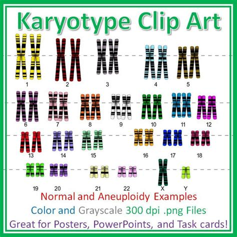 biography and autobiography task cards human karyotype chromosome clip art diagrams for posters