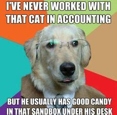 Accountant Dog Meme - lol on pinterest no meme memes and dog memes