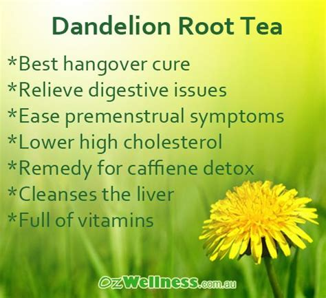 Dandelion Root Detox Benefits by 17 Best Images About Herbal Tea On Dandelion