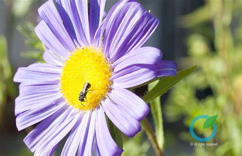 coltivare fiori coltivare fiori per il giardino la casa e l orto
