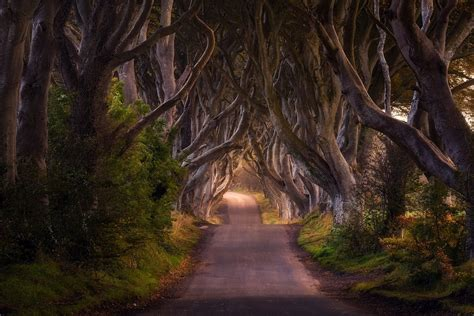Tree Netting Ireland by Nature Landscape Road Trees Shrubs Tale
