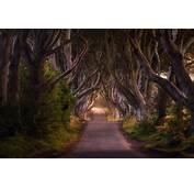 Nature Landscape Road Trees Shrubs Fairy Tale