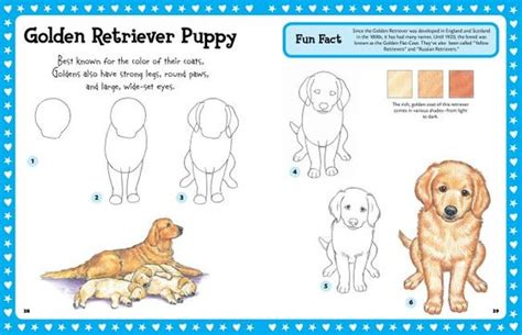 how to draw a golden retriever step by step drawing puppies go back gt pix for gt how to draw a golden retriever