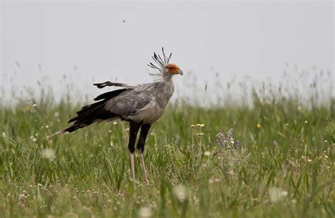 birdsouthafrica rietvlei nature reserve