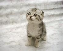 ... , Selamat terpesona melihat foto kucing-kucing lucu berikut ini