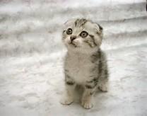 Foto-foto kucing lucu   Kucing gue