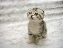 foto foto kucing lucu kucing gue click for details gambar foto kucing ...