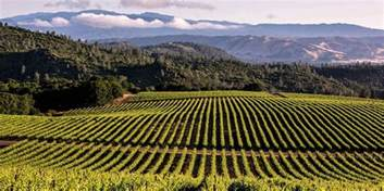 amazing wine country destinations visit california