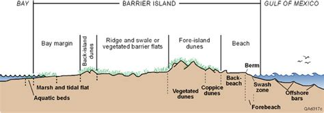 sand dune cross section the texas high school coastal monitoring program mustang
