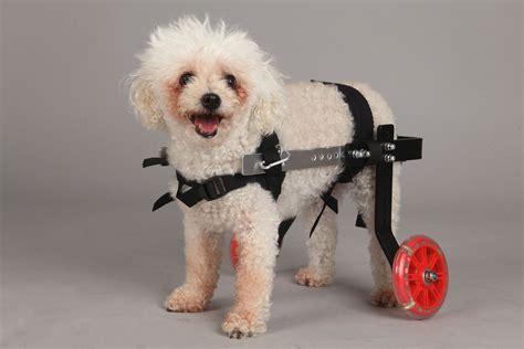 silla ruedas para perros silla de ruedas para perros mini fantasy novecan