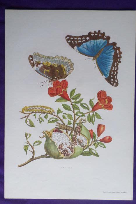 Die Sch Nsten Schmetterlinge 4950 by Suriname Sibylla Merian Gerhard Nebel Die