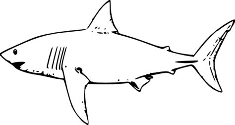 Free Coloring Pages Of Greatwhite Great White Shark Template