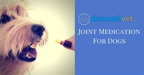joint medicine for dogs joint medication for dogs stem cell vet uk