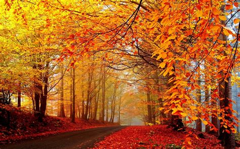 autumn landscape wallpaper 177893 autumn fall landscape nature tree forest leaf leaves road