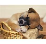 Sleepy  Puppies Wallpaper 9415133 Fanpop