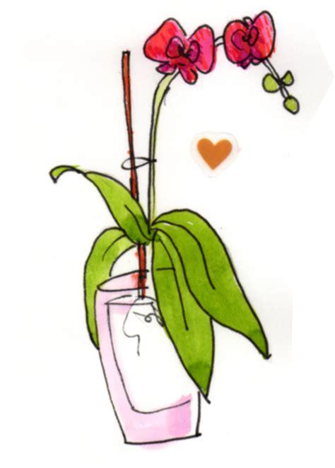 come curare l orchidea in vaso come curare l orchidea phalaenopsis blossom zine