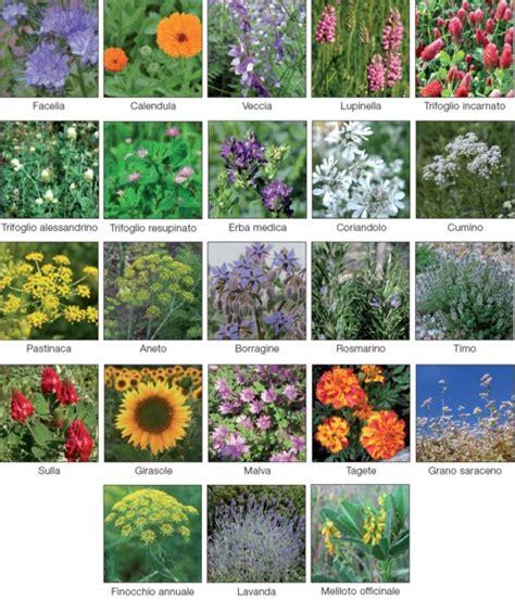 elenco nomi dei fiori la lista dei fiori quot amici della api quot terra nuova