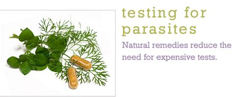 Different Types Of Stool Tests by Testing For Parasites Dr Pepi S Health Tips
