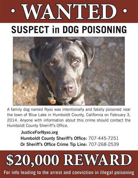 rat poison in dogs justice for nyxo