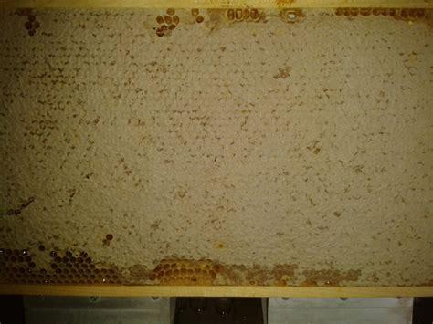 wann honig schleudern imkerfamilie fritz honig ernte und verarbeitung