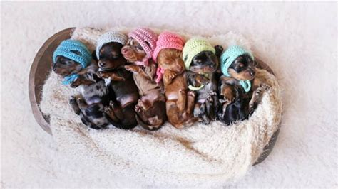 newborn puppy photoshoot 6 newborn puppies fetch smiles in photo shoot with see the pics today