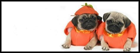 pug cover photo 60 best pug covers images on