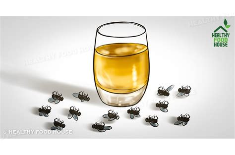 how to get rid of flies in my house how to get rid of flies quickly inside and outside