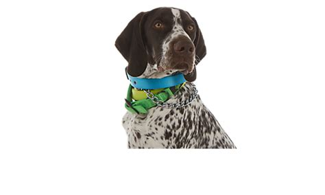 petsmart leash collars harness leash petsmart