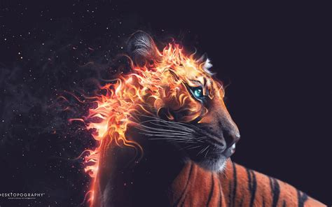 Www Hd by Tiger Wallpapers Hd Wallpapers
