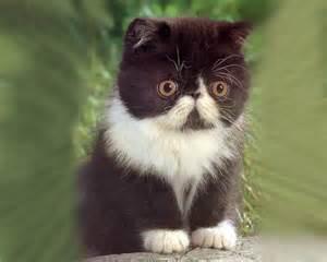 Cute_<strong>kitten</strong>.jpg