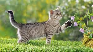 <strong>Kitten</strong>-achtergronden-jonge-katjes-hd-<strong>kittens</strong>-wallpapers-foto-1.jpg