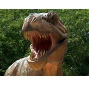 Dinosaur T Rex Picture
