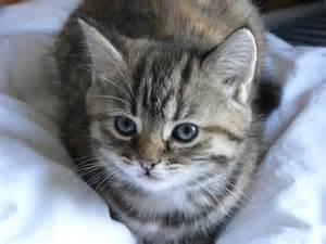 girl-<strong>kitten</strong>-786379.JPG