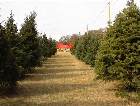 best 28 dallas christmas tree farm dfwchild christmas