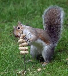 diy squirrel peanut treat kabob petdiys com