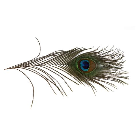 Real A by Real Peacock Feather Www Pixshark Images Galleries