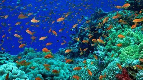 mayor proteccion  el espacio marino lanzarote