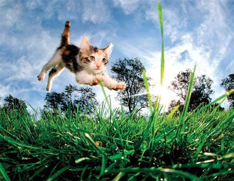 Pdf Pounce Seth Casteel by Animal Photographer Seth Casteel Pounces Into Cats Pets
