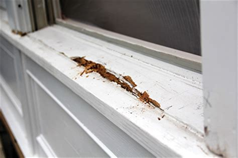 Window Sill Nose Patching Rotted Window Sills How To