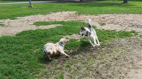 puppy parks near me city of katy park parks katy tx yelp