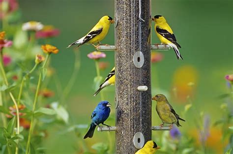feeding finches backyard get your backyard ready for the season