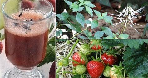 cara membuat jus mangga bhsa inggris cara membuat jus apel dengan bahasa inggris buah sirsak