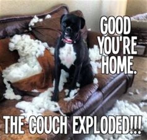 buzzfeed anxious puppy 1000 images about boxer dogs on brindle boxer puppies brindle boxer and