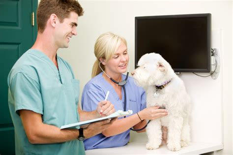 becoming a veterinary technician or assistant careers working with animals peterson s