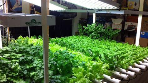 orto in casa orto in casa coltivare orto come coltivare l orto in casa